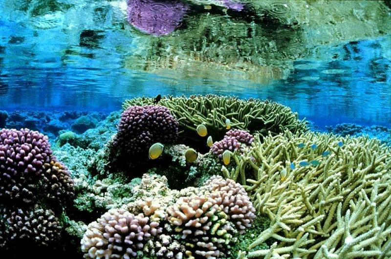 korally